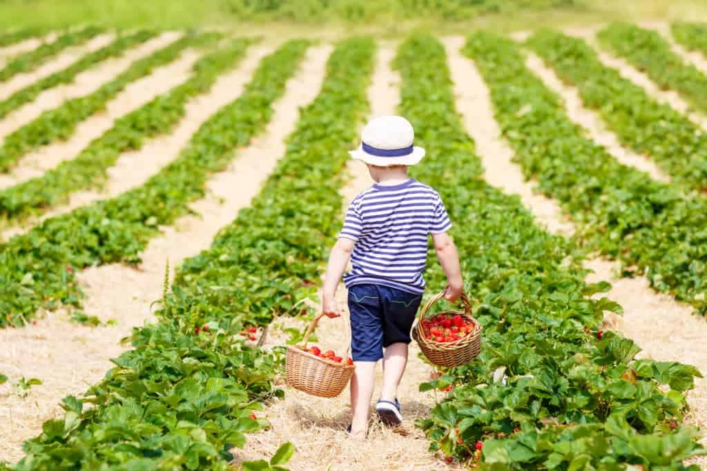 Take your kids berry picking for a fun summer activity