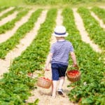 24 Free Activities to Do with Your Kids; Take your kids berry picking for a fun summer activity