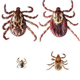 Stay safe this summer by knowing about ticks: tick prevention, tick safety and safely removing ticks on the skin. Symptoms of tick bites to be aware of and potential Lyme Disease symptoms.