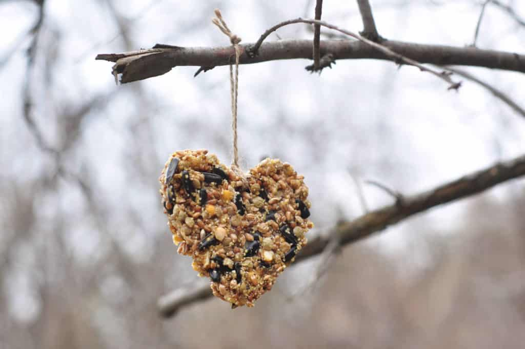 Homemade bird feeder with your kids
